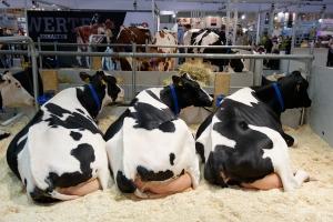Ganadería bovina en EUROTIER 2016