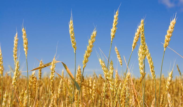 Phosphates to food