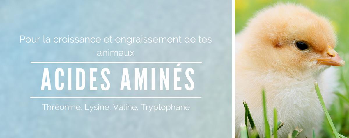 AcidesAminés-OK_edited