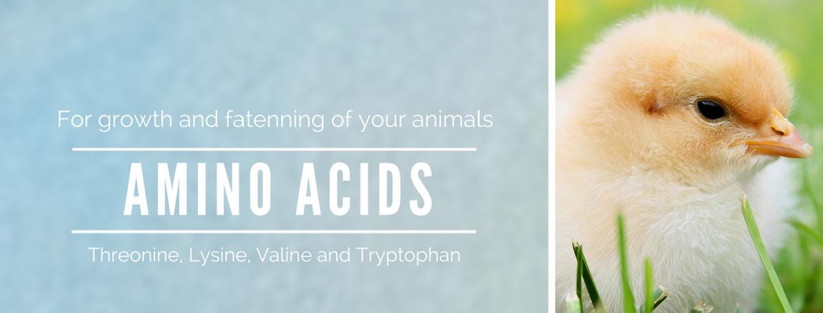 Amino-Acids-OK_EN_edited