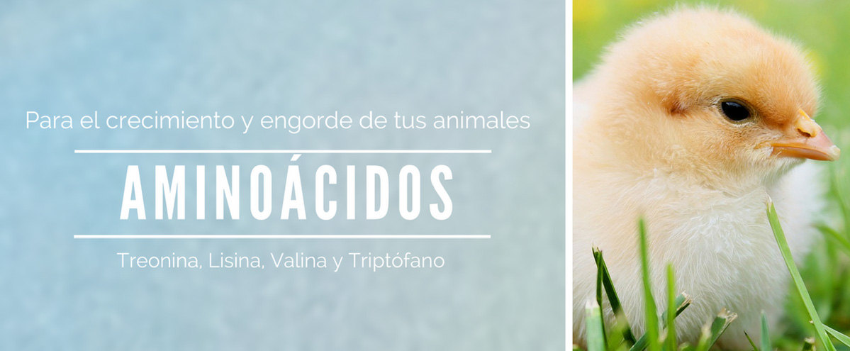 Aminoacidos-edited