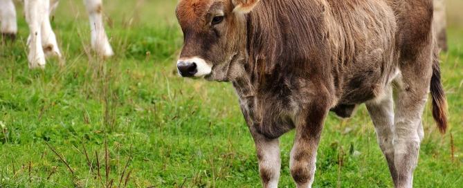 Aditivos y minerales para alimentación animal