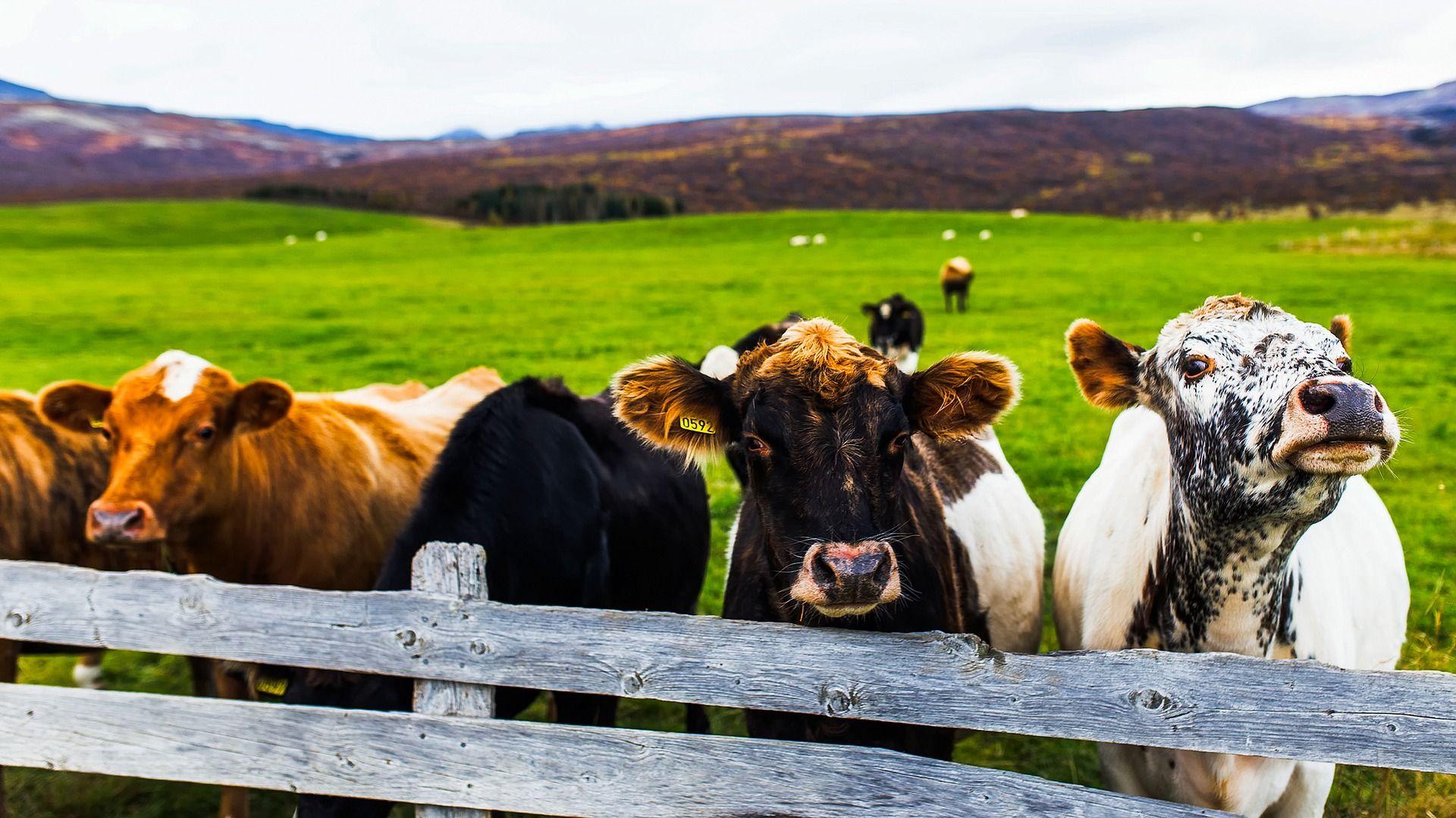 Trabajo sector alimentación animal