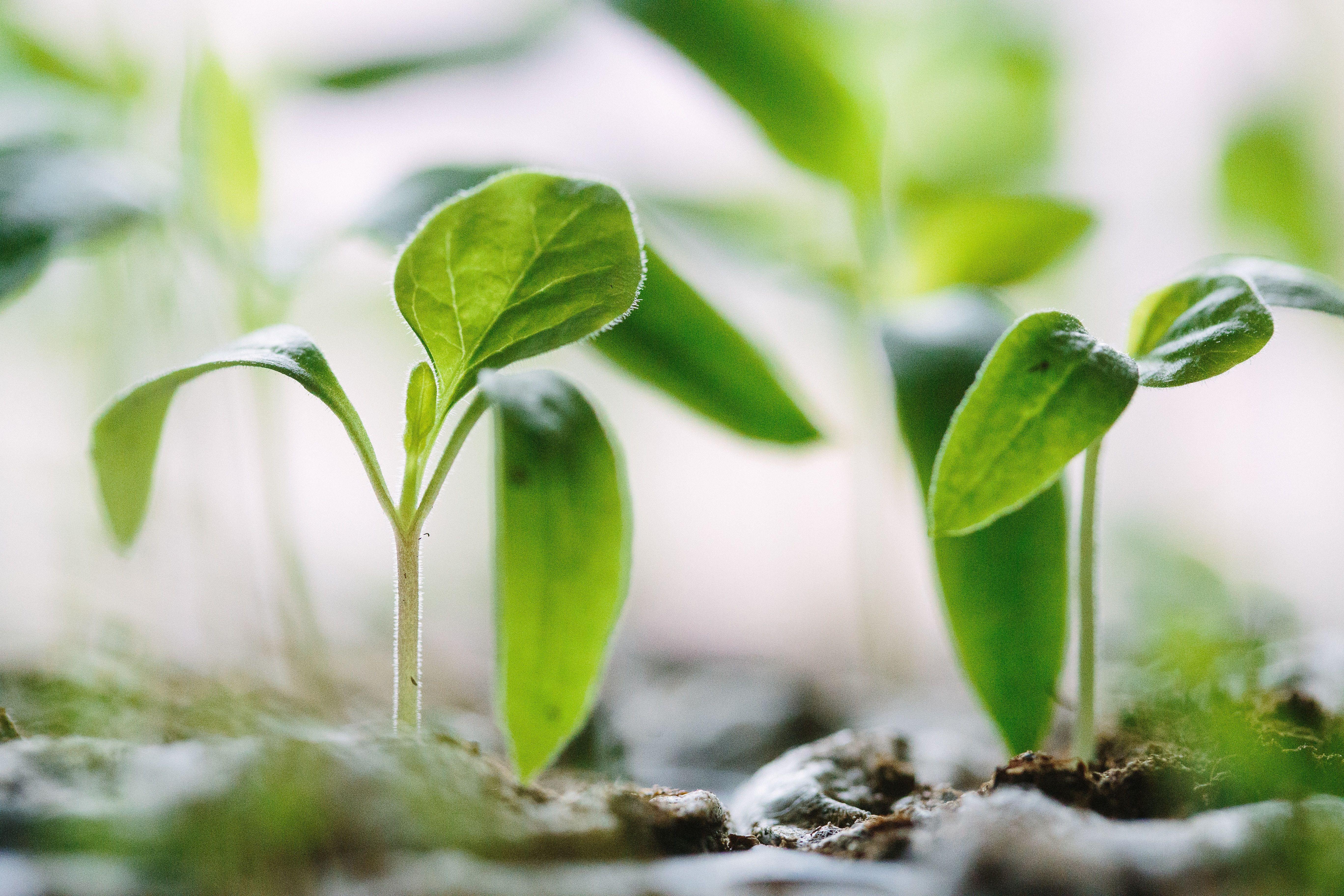 Agricultura, cultivos, fitosanitarios y fertilizantes